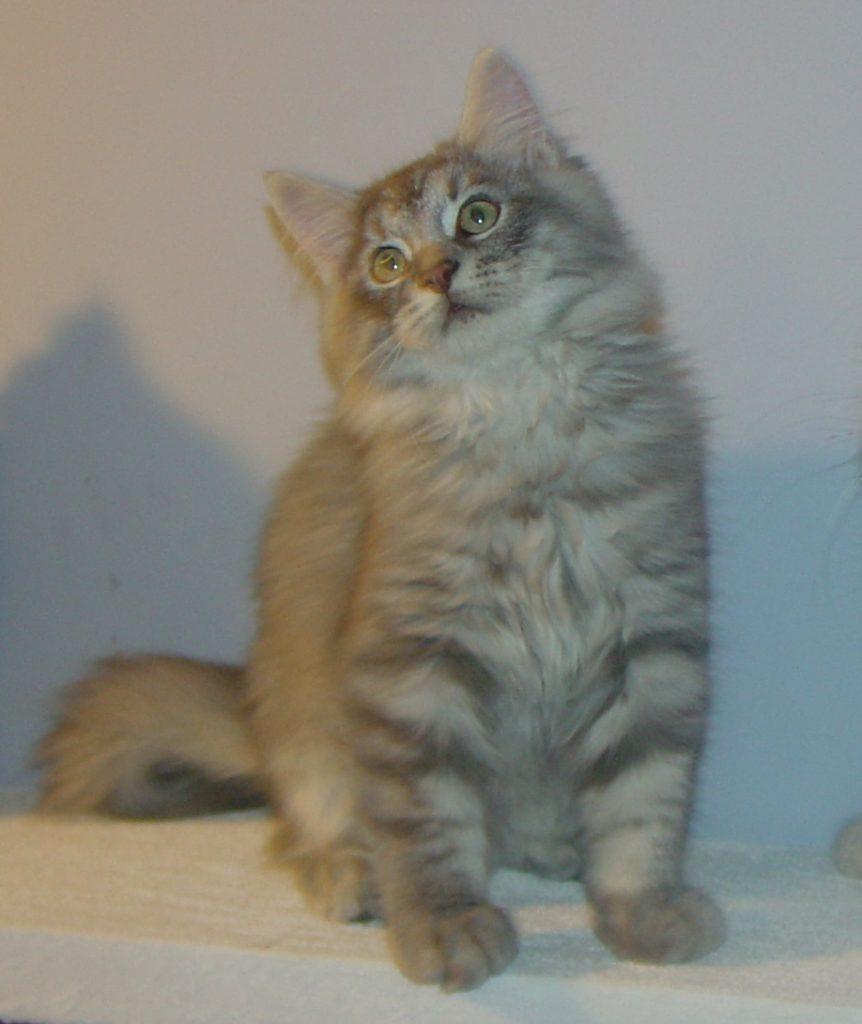 Photo of Gray/Tasha M1 (sold)