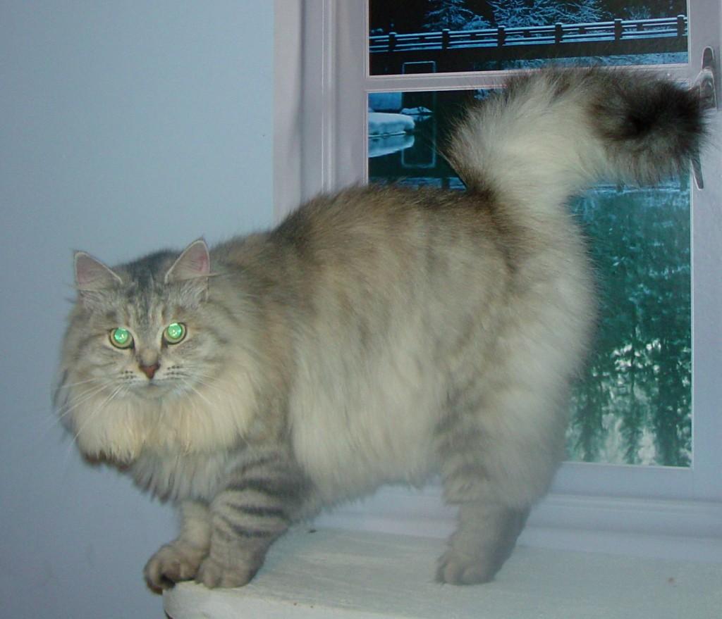 Photo of Gray/Tasha F2 (reserved)