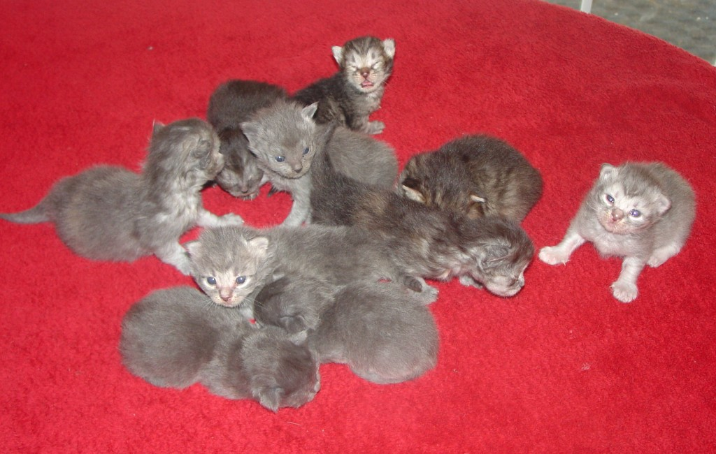 Photo of New litters for Christmas are here, call 225 687 7590