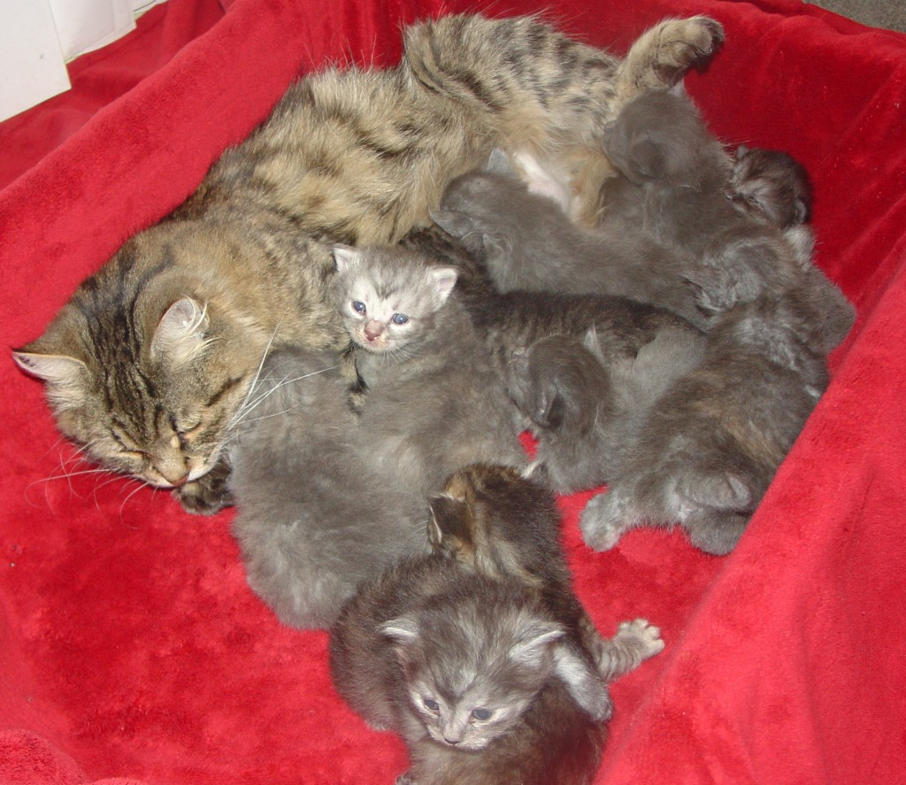 Photo of Christmas Litter