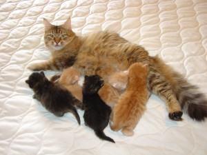 Photo of 3 New Litters (AVAILABLE)