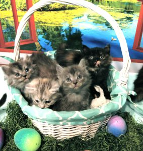 Photo of Two New Litters,        Happy Easter