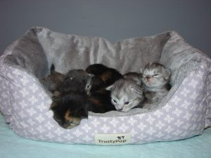 Photo of Knight/Crystal  litter (reserved)